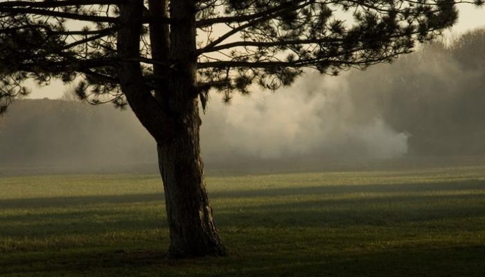 treesmokeweb