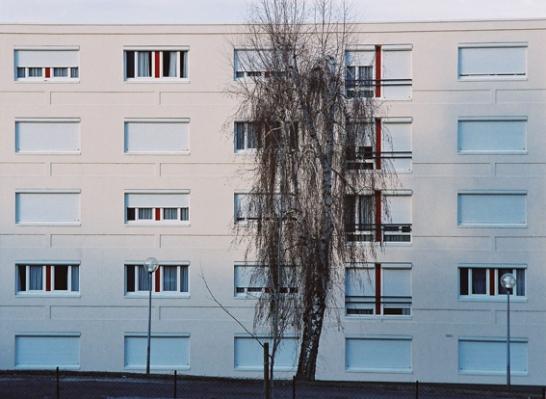 immeuble_arbre